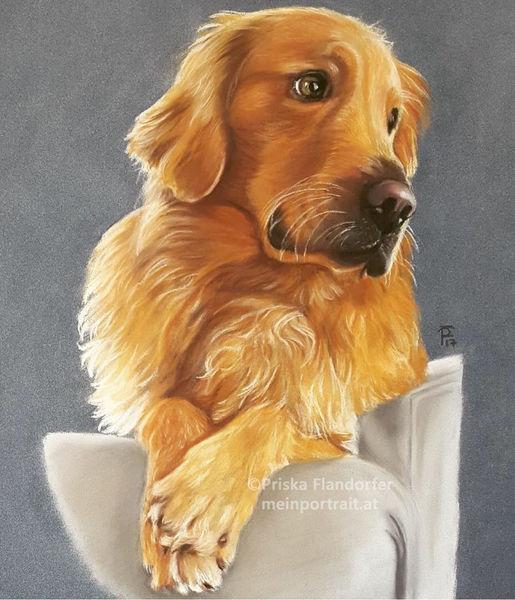 Portrait, Hundeportrait, Zeichnung, Realismus, Malerei, Goldenretriever