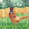 Fasan jagdfasan vogel, Aquarell