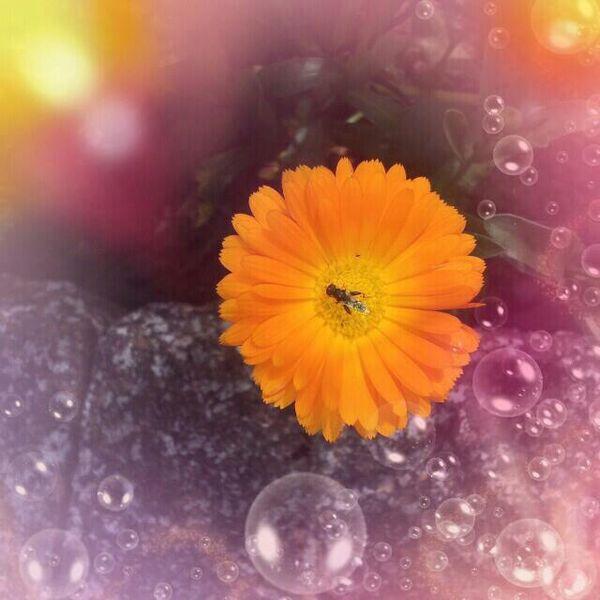 Verträumt, Blumen, Fliege, Blase, Digitale kunst