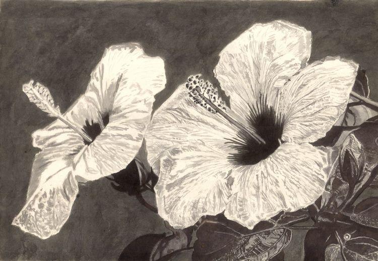 Hibiskus, Blüte, Blätter, Stempel, Zeichnungen