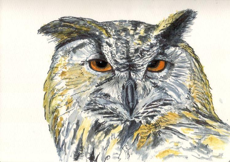 Uhu, Tiere, Natur, Lebewesen, Vogel, Blick
