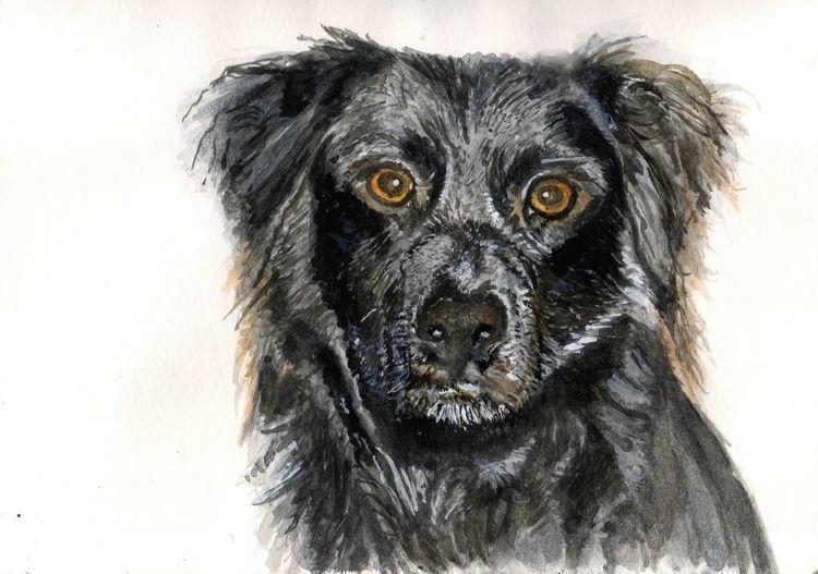 Fell, Hund, Tiere, Nase, Augen, Natur