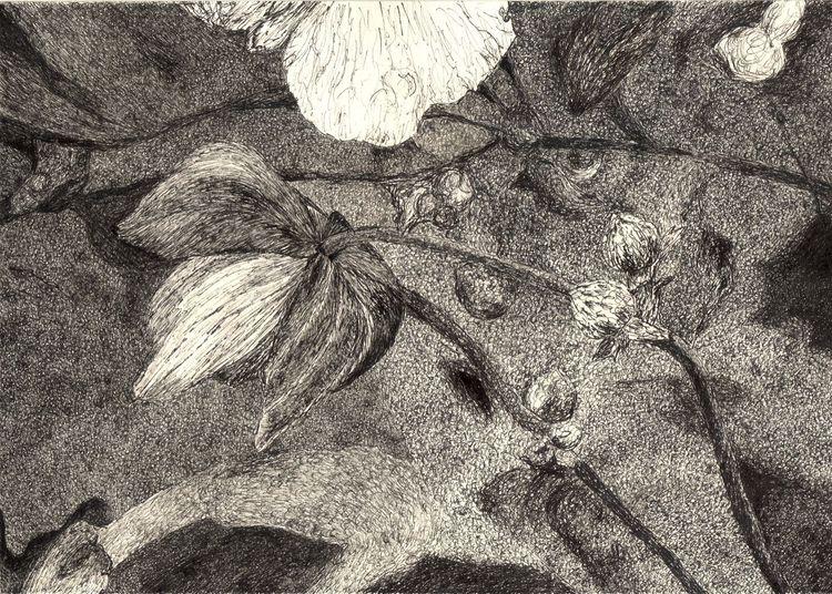 Pflanzen, Zeichnung, Knospe, Schwarz weiß, Blüte, Blätter