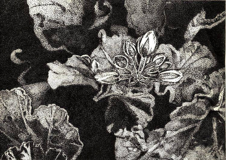 Schwarz weiß, Tuschezeichnung, Pflanzen, Blüte, Blätter, Balkon