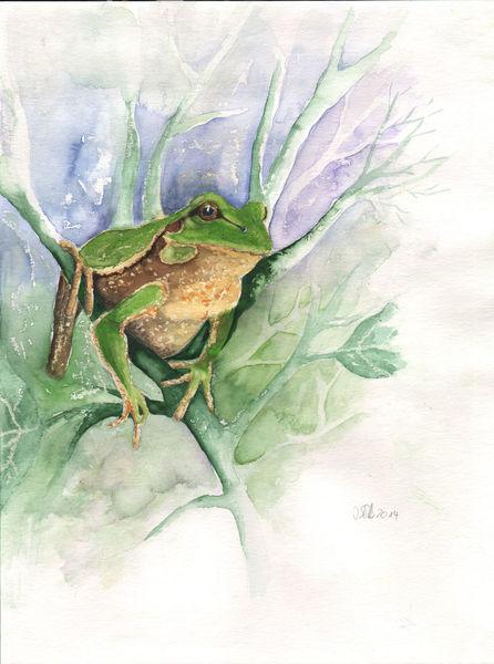 Gegenständliche, Portrait, Aquarellmalerei, Amphibien, Tierportrait, Gemälde