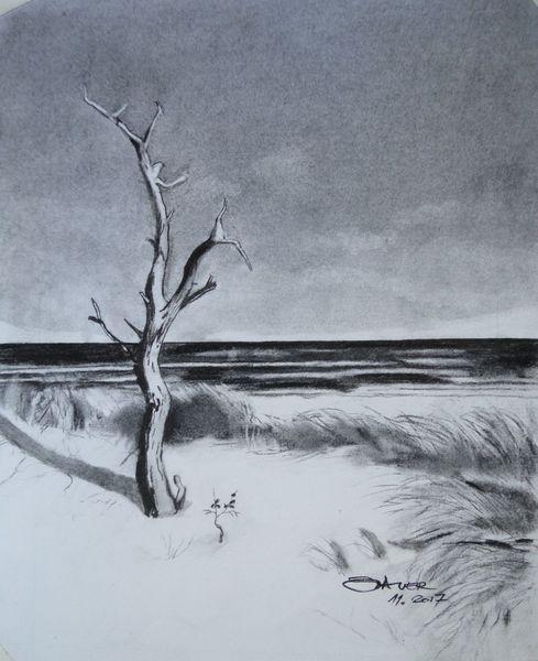 Baum, Strand, Himmel, Gras, Wasser, Zeichnungen
