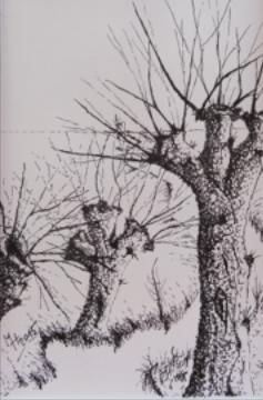 Tuschmalerei, Weiden, Fluss, Zeichnungen