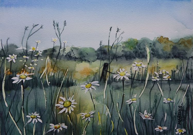 Margerite, Sommer, Wiese, Aquarell