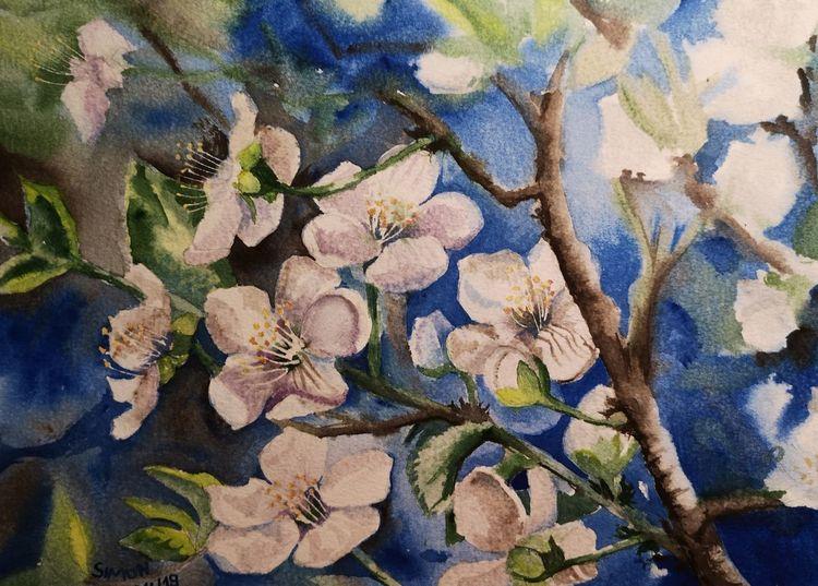 Mirabelle, Blüte, Baum, Aquarell