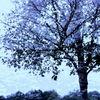 Baum, Landschaft, Himmel, Fotografie