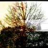 Himmel, Mittelformat, Yashika, Baum