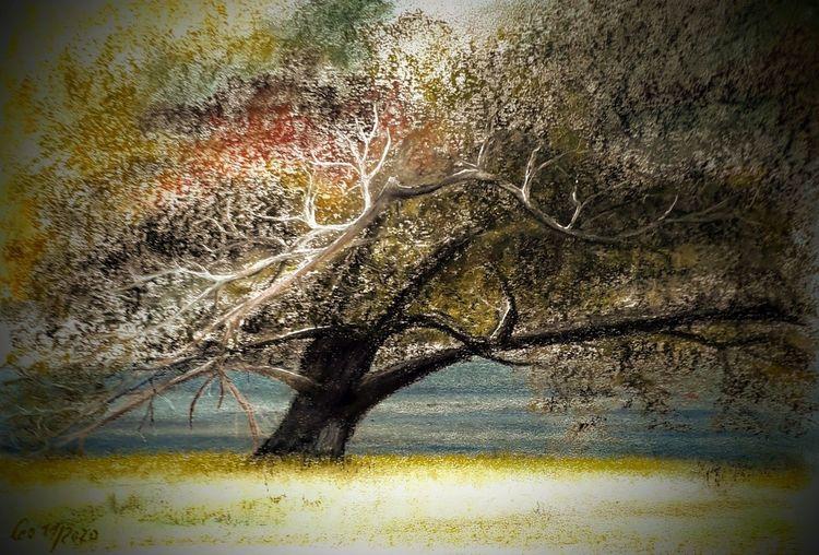 Kreide, Strauch, Baum, Alte bäume, Alt, Wasser