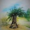 Baum, Park, Himmel, Alte bäume