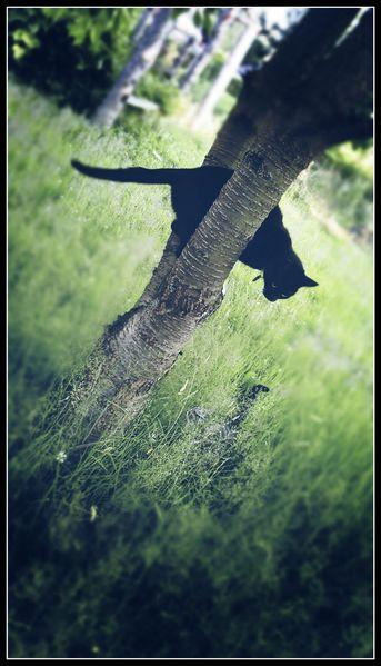 Katze, Haustier, Versteck, Fotografie