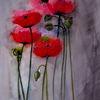 Kapsel, Knospe, Mohn, Blumen