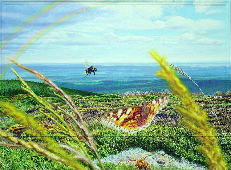 Malerei, Harz, Weite, Sommer, Schmetterling, Wiese