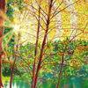 Sonne, Oktober, Lichtmalerei, Baum