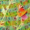Lichtmalerei, Schmetterling, Blüte, Spektralfarbe
