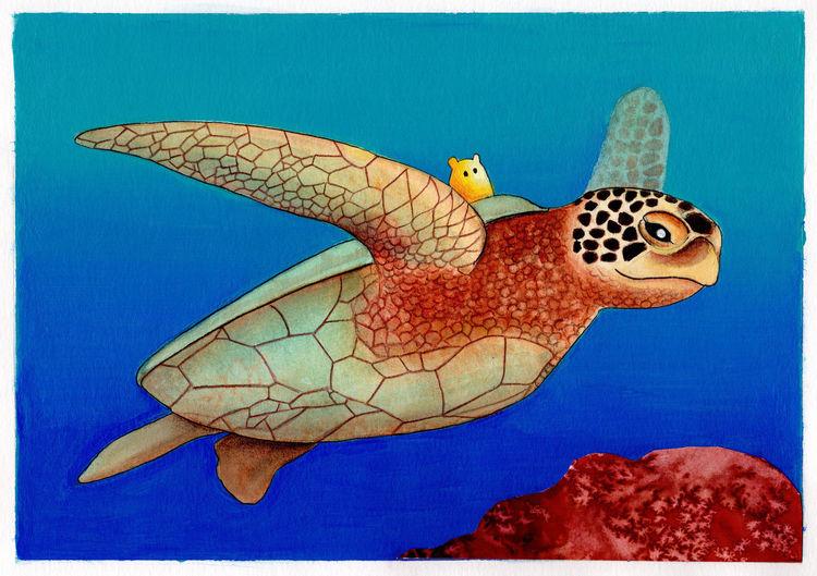 Bilderbuch, Meer, Kinderbuch, Ozean, Schildkröte, Illustration