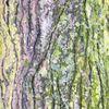Natur, Acrylmalerei, Baumrinde, Malerei