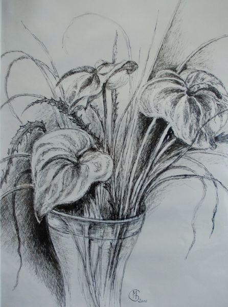 Federzeichnung, Flamingoblume, Vase mit blumengebinde, Zeichnungen, Vase