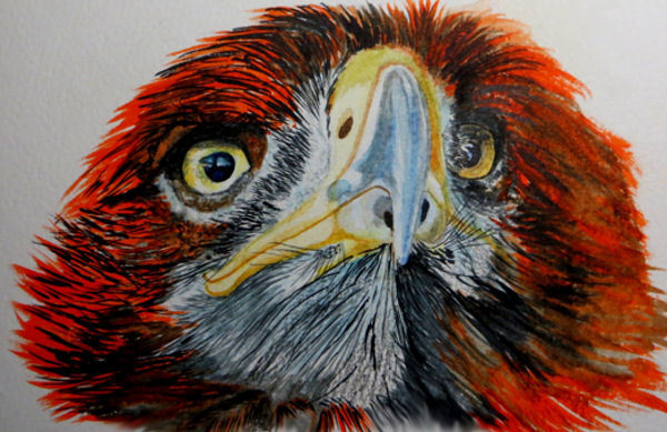 Rot, Vogel, L farbe, Aquarell, Tiere, Adler