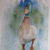 Aquarellmalerei, Tiere, Feder, Enten
