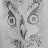 Zeichnung, Eule, Zeichnungen, Portrait