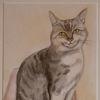 Blick, Katze, Aquarellmalerei, Aquarell