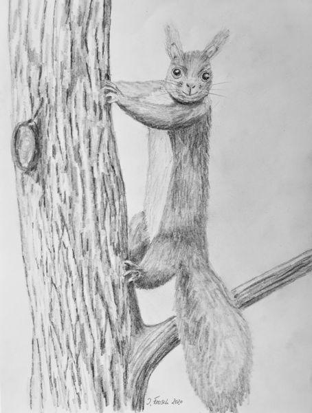Wald, Baum, Eichhörnchen, Rinde, Tiere, Natur
