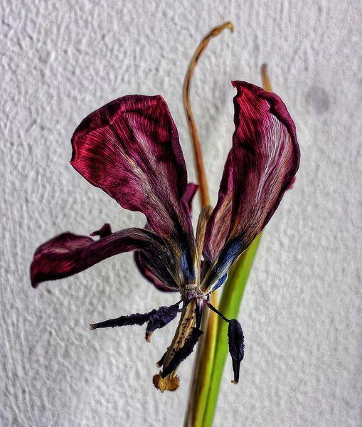 Fotografie, Blumen, Eines tages