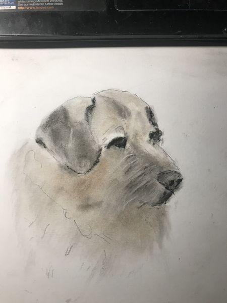 Hund, Kreide, Karton, Zeichnungen