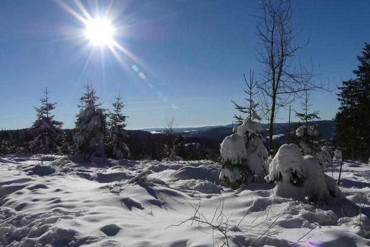 Winter, Baum, Schnee, Kalt, Sauerland, Blauer himmel