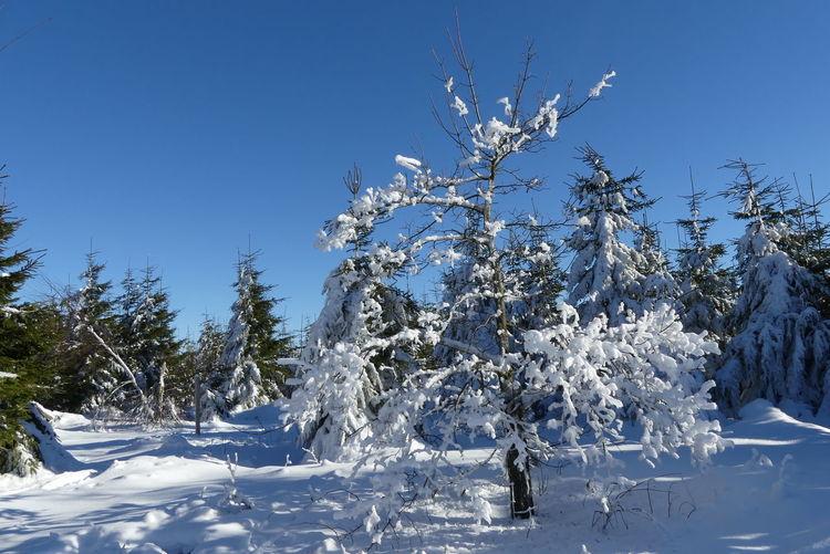 Kalt, Winter, Weiß, Schnee, Baum, Blau