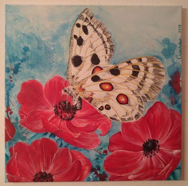 Apollofalter, Natur, Schmetterling, Leichtigkeit, Malerei