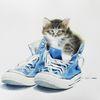Katze, Tiere, Kätzchen porträt, Aquarell