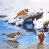 Vogel, Frühling, Wasser, Schnee
