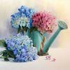 Stillleben, Hortensien, Blumen, Gießkanne