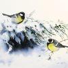 Kohlmeise, Winter, Vogel, Schnee