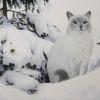Schnee, Katze, Tiere, Winter
