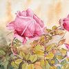 Blumen, Rose, Aquarellmalerei, Aquarell