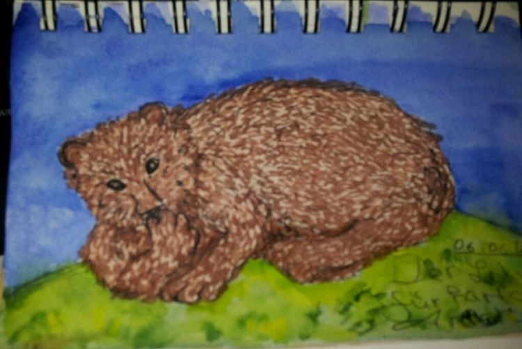 Bär, Gemütlichkeit, Natur, Illustrationen