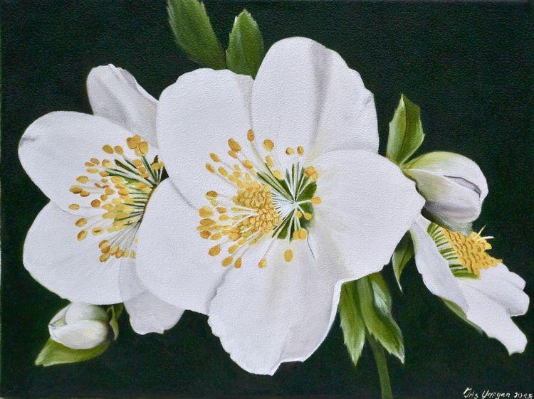Ölmalerei, Fotorealismus, Christrose, Weiß, Schneerose, Blüte