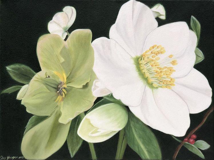 Weiß, Ölmalerei, Grün, Christrose, Fotorealistische malerei, Blüte