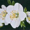 Schneerose, Blüte, Ölmalerei, Fotorealismus