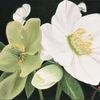 Fotorealistische malerei, Blüte, Blumen, Weiß