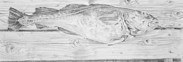 Fisch, Norwegen, Fang, Natur, Dorsch, Tiere