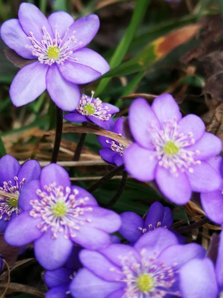 Blumen, Pflanzen, Natur, Fotografie