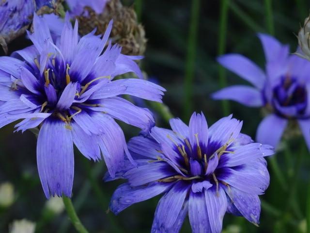 Blumen, Natur, Fotografie