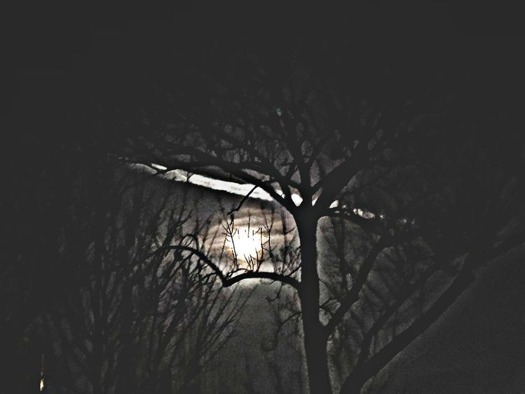 Natur, Baum, Nacht, Mond, Fotografie